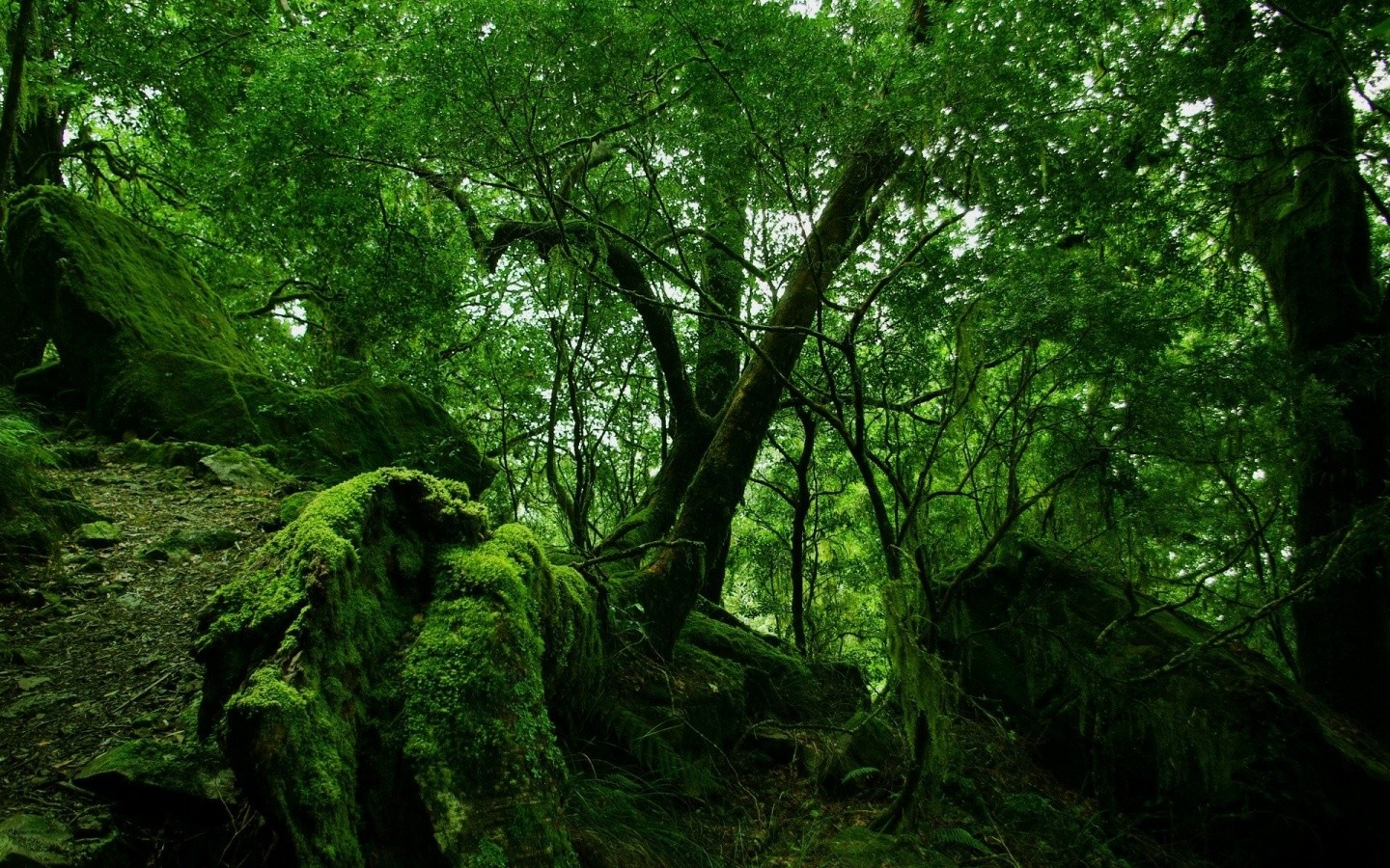 1440x900 Green Forest Vegetation Wallpaper Cool Images Amazing HD 1440x900