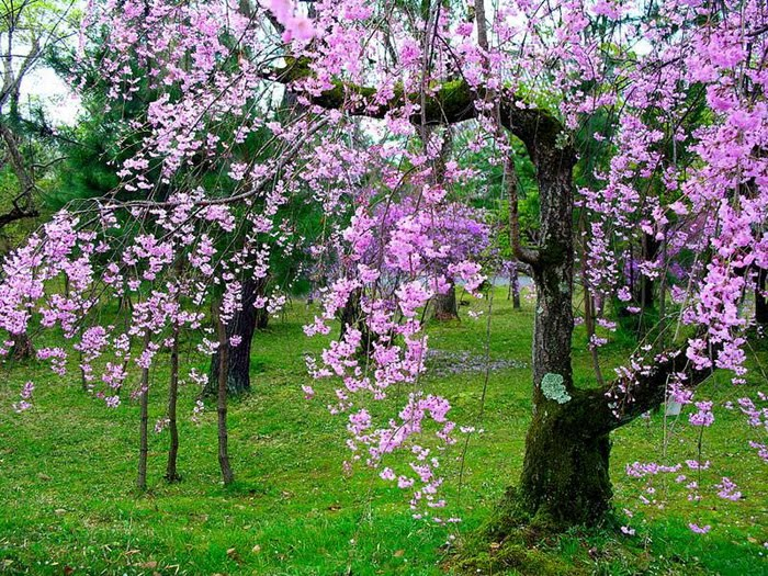 Beautiful Tree Wallpapers 700x525
