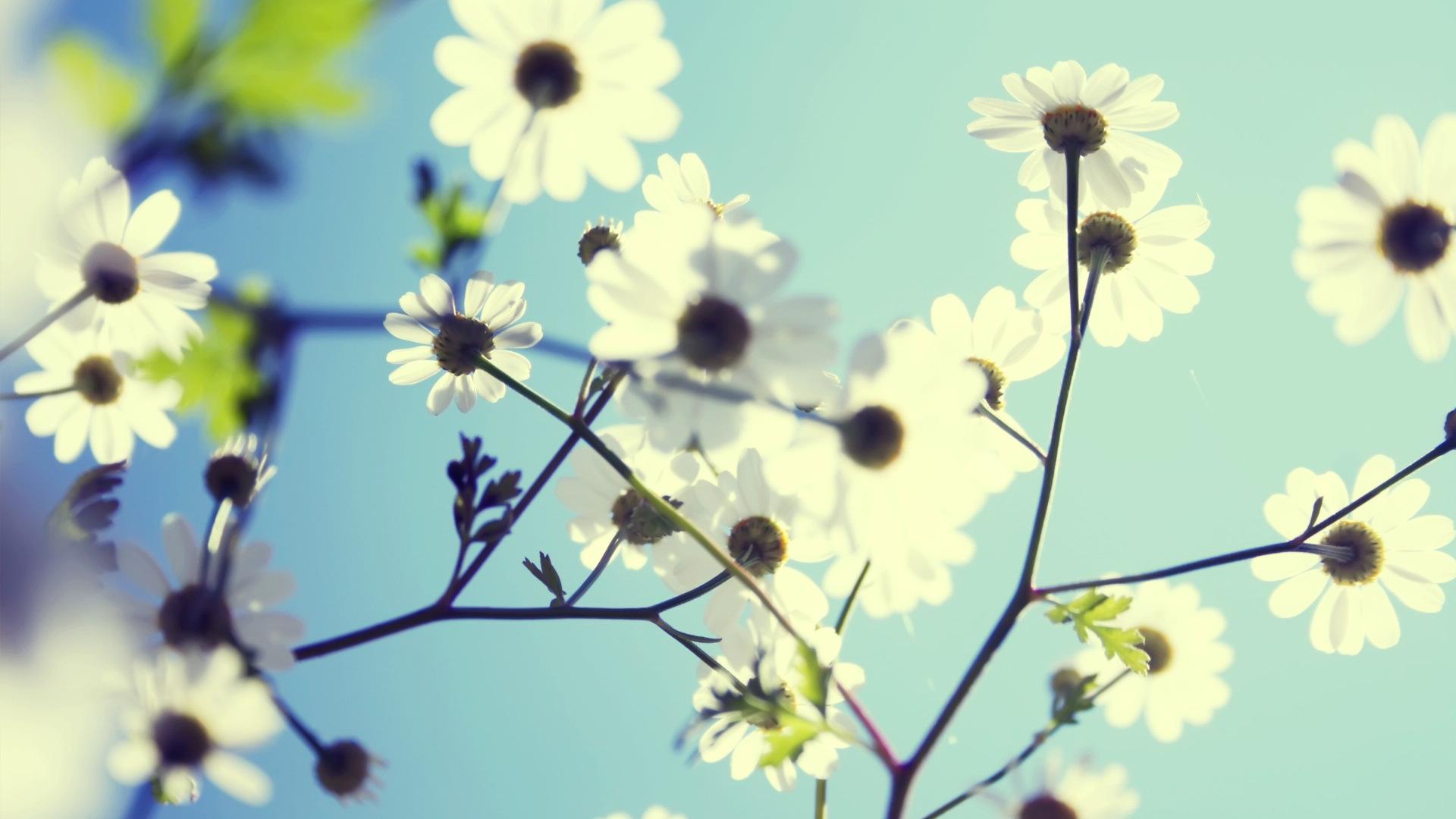Flower Instagram wallpaper   617840 1920x1080