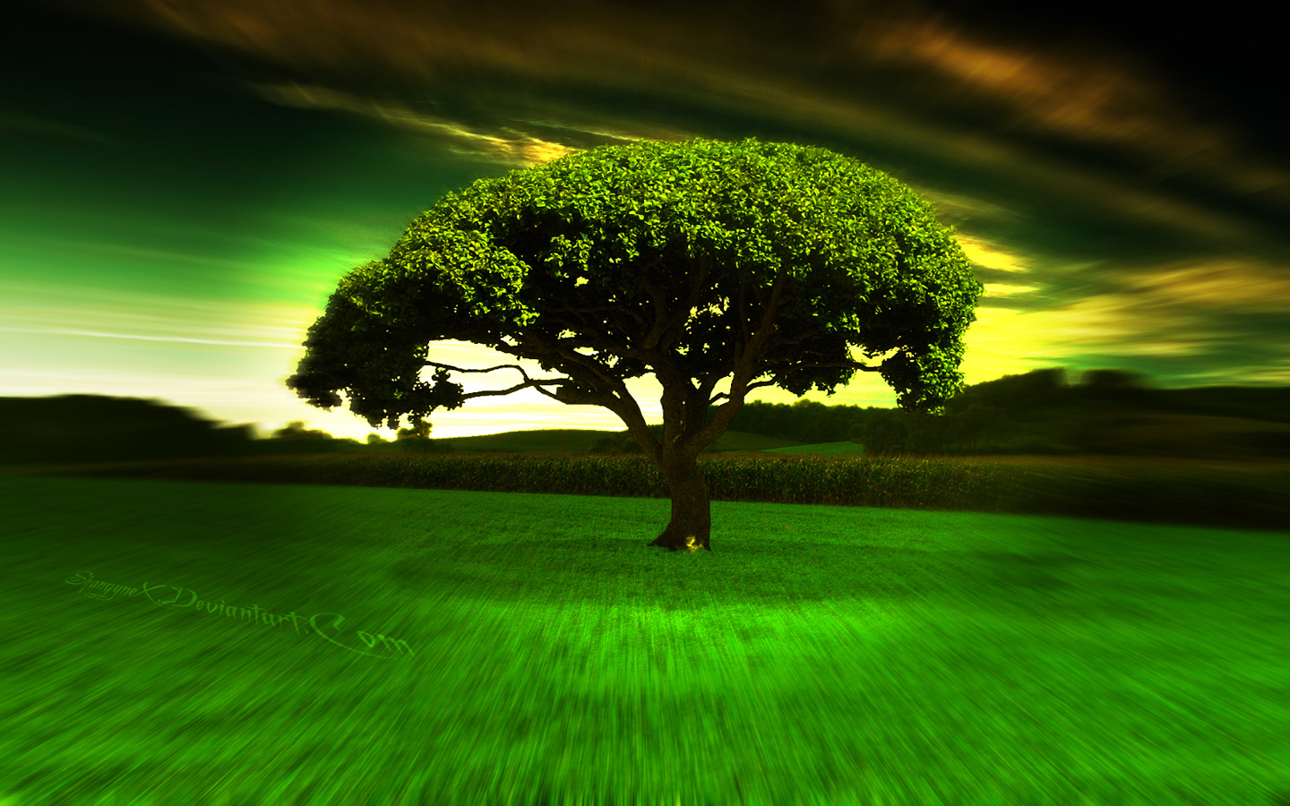 hypno tree 2 hd widescreen wallpapers 1440x900jpeg 1440x900