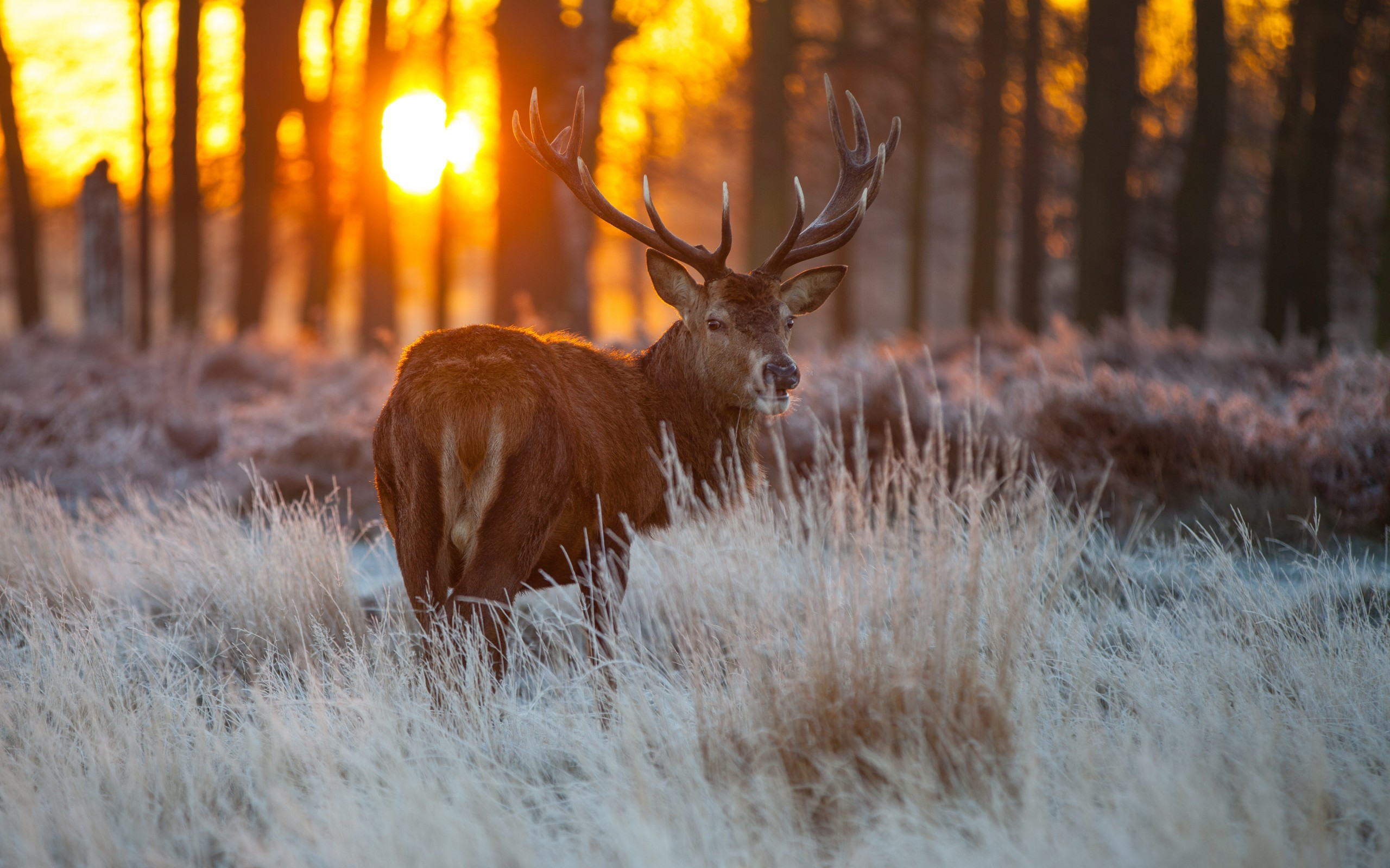 Red Deer Wildlife HD Wallpaper   New HD Wallpapers 2560x1600