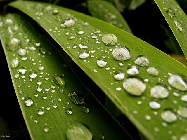 3D Rain Drops HD Wallpaper Download Hd Wallpapers 2u 640x480