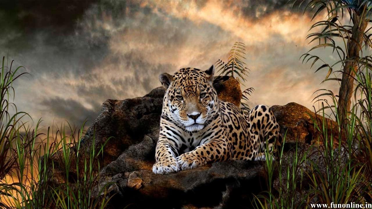 Jaguar Wallpapers Stunning Jaguar HD Wallpapers for Download 1280x720