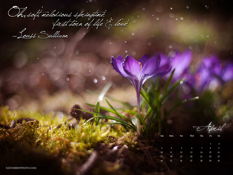 Free Download April Showers Calendar By Sorrelstang 800x600 For