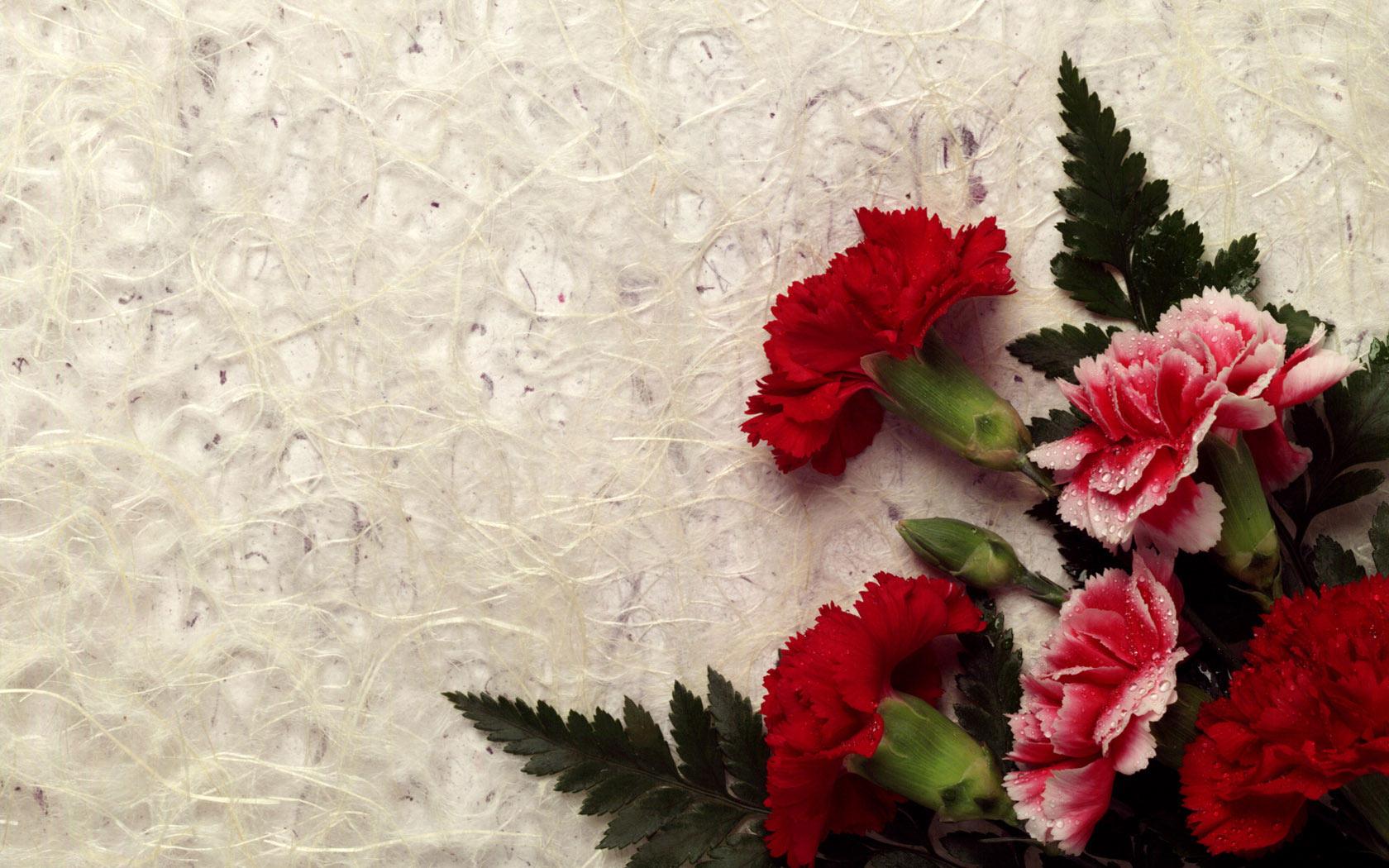 Most beautiful Flower lovers HD Wallpaper 1680x1050