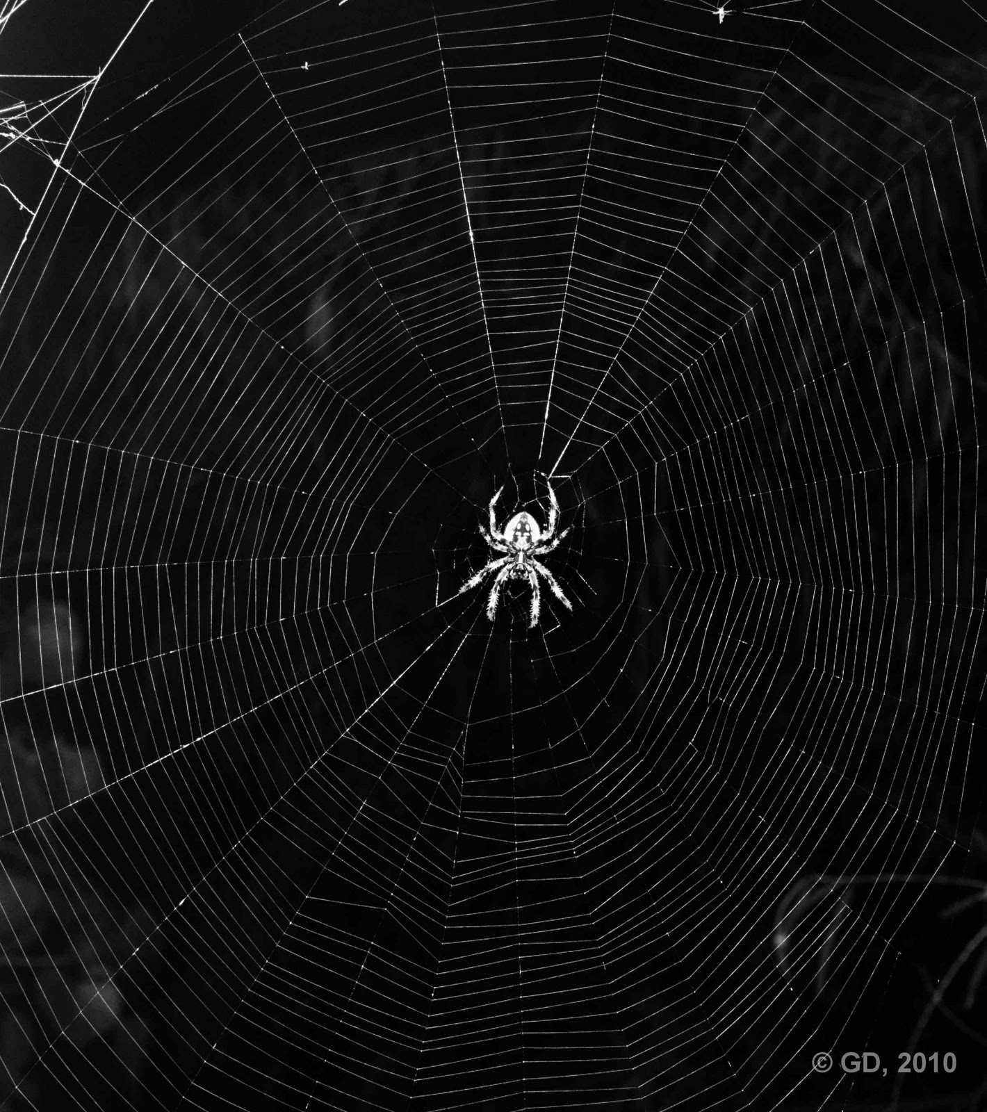 Spider Web Background Thanks to the spider 1420x1600