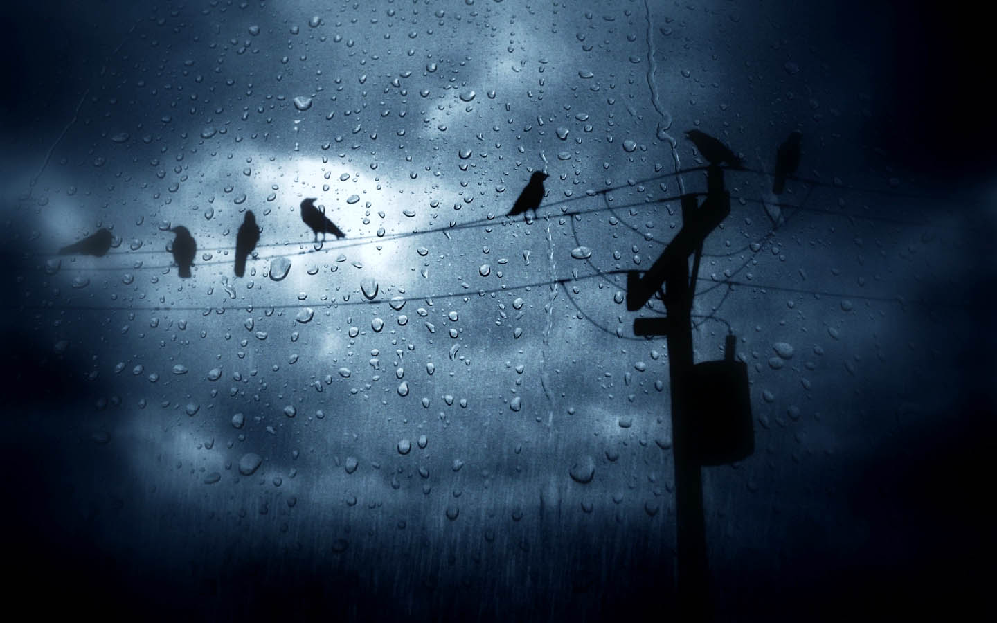 The Birds In The Rain HD Wallpaper Animals Wallpapers 1440x900