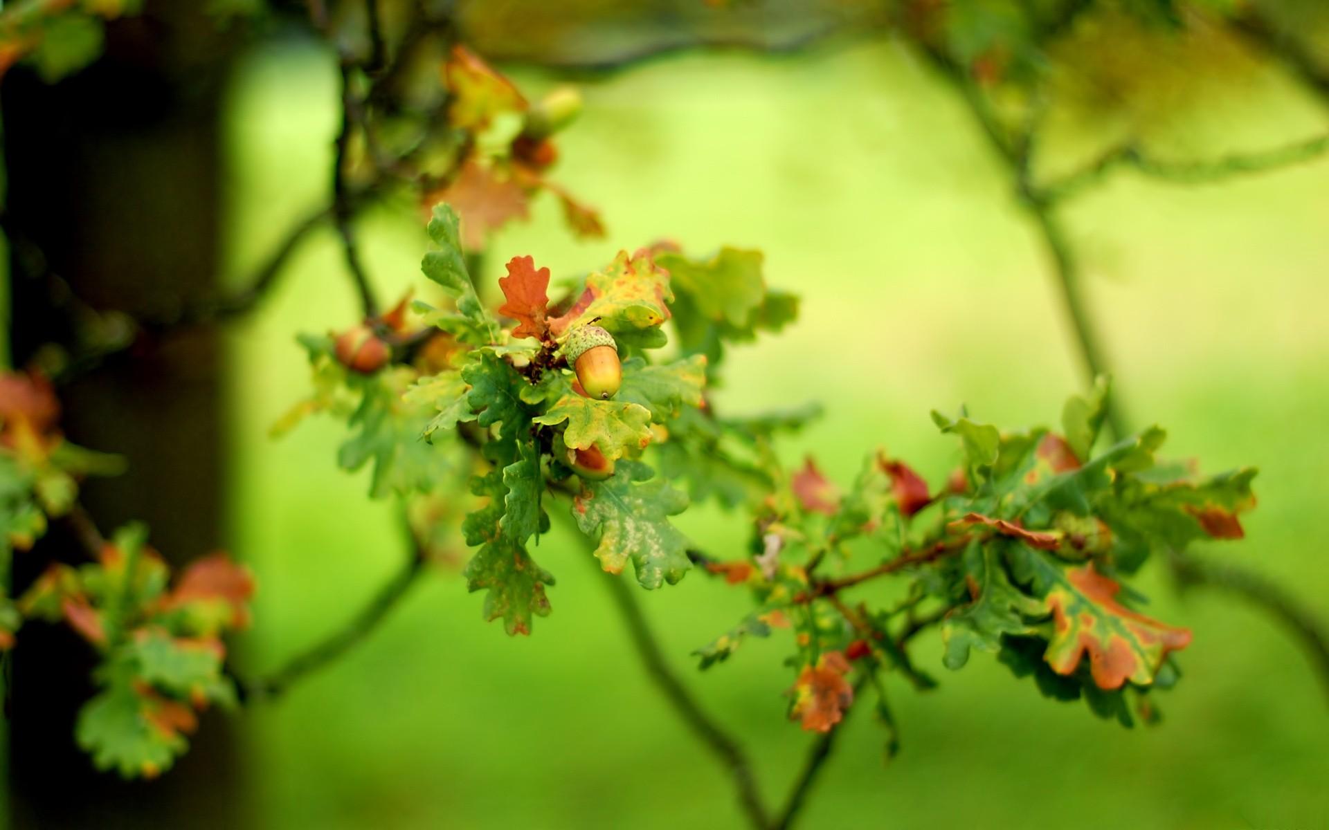 ветка с листьями  № 3792440 без смс