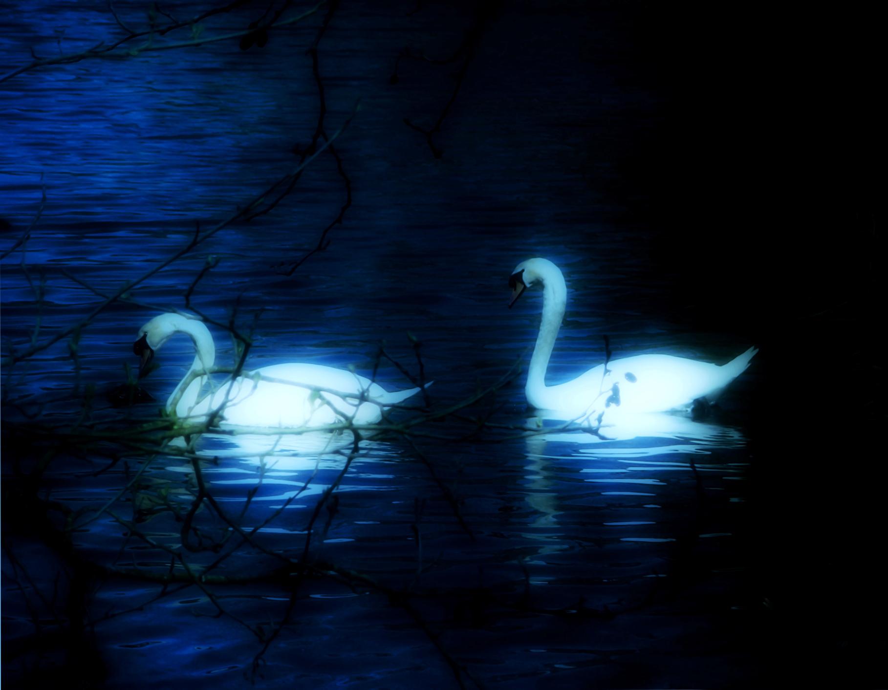 Swan Lake Wallpapers 1817x1412