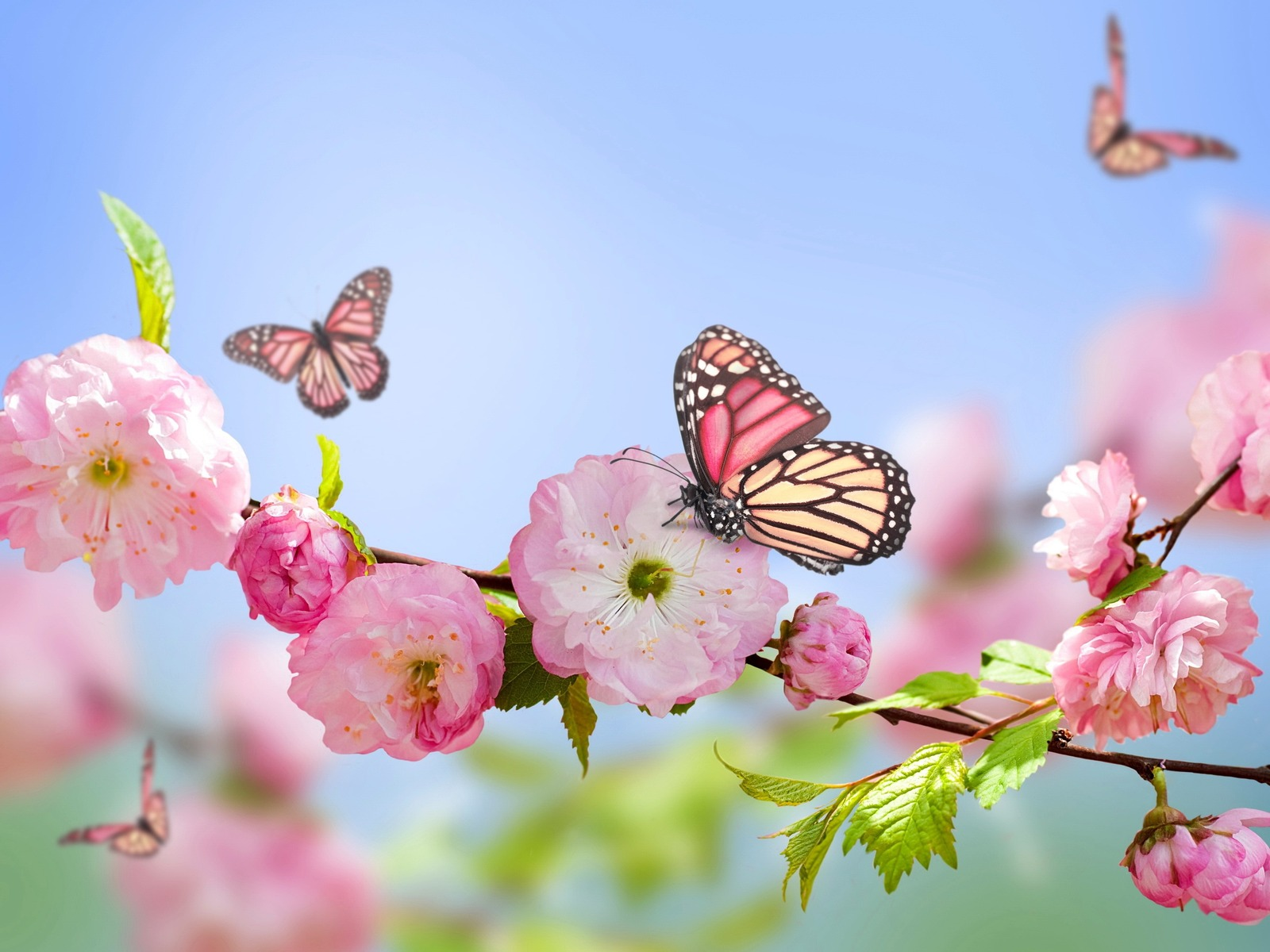 Download wallpaper 1600x1200 flowers butterflies spring bloom 1600x1200
