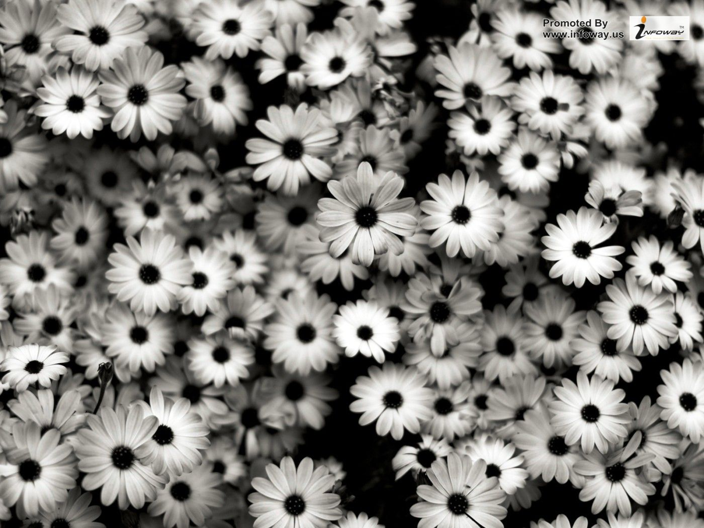 Black and White Flowers Wallpaper - WallpaperSafari