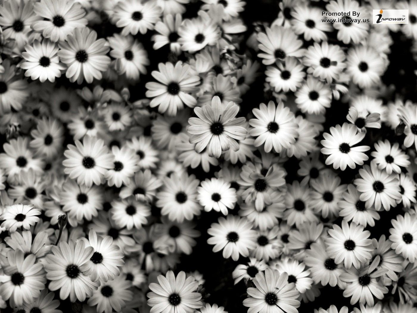Black and White Flowers Wallpaper - WallpaperSafari