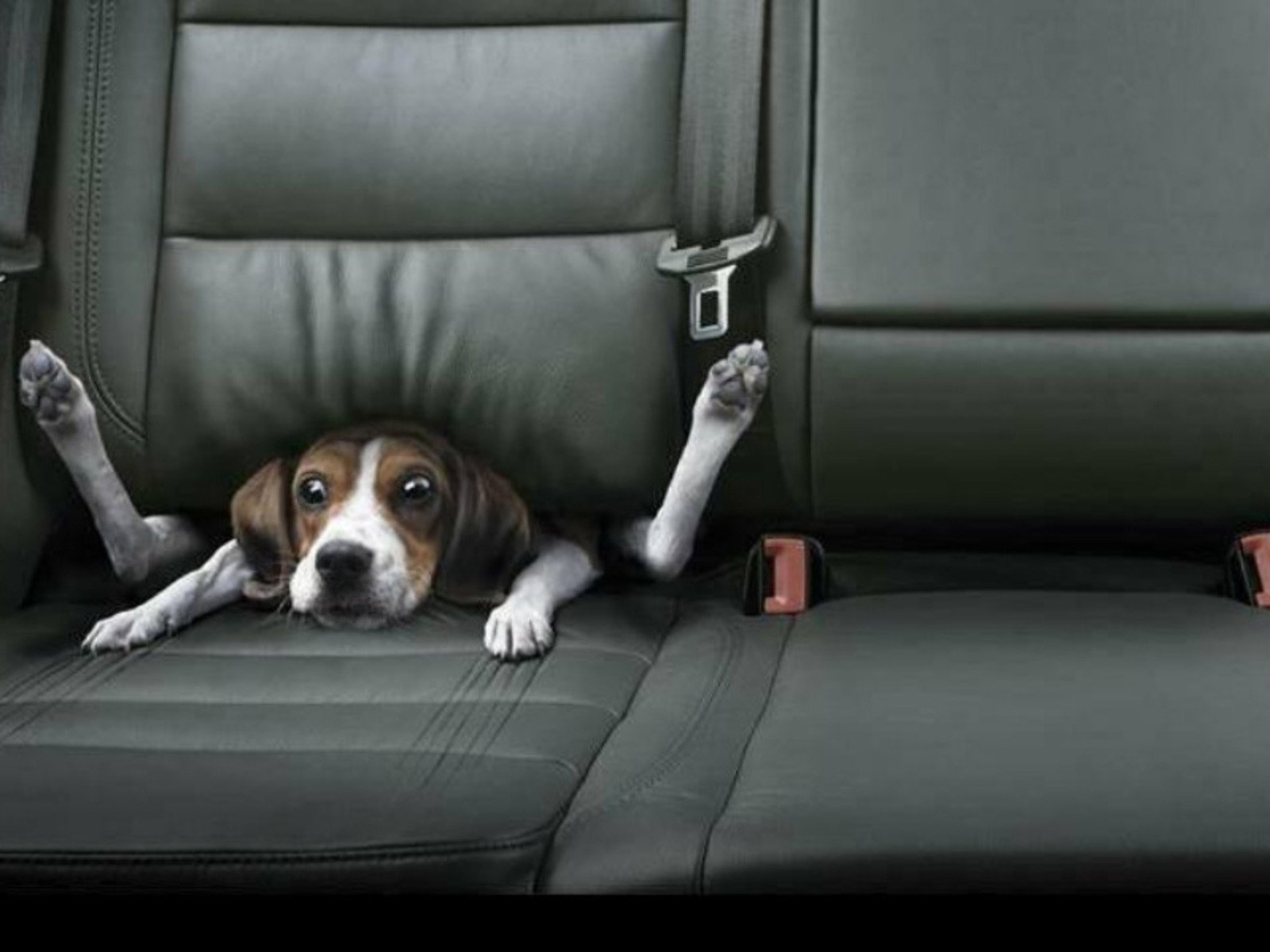 All Wallpapers Funny Dogs Wallpapers 1600x1200