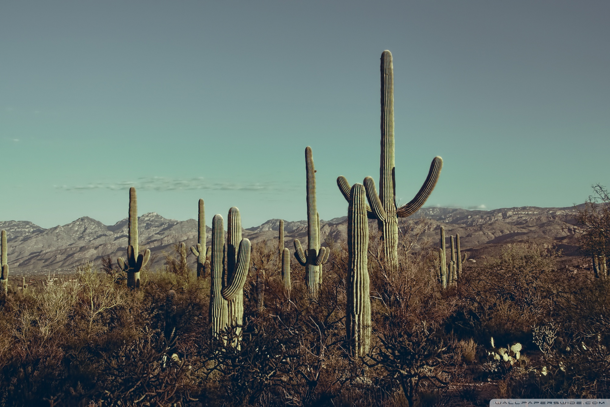 Saguaro National Park East Arizona 4K HD Desktop Wallpaper for 2000x1333