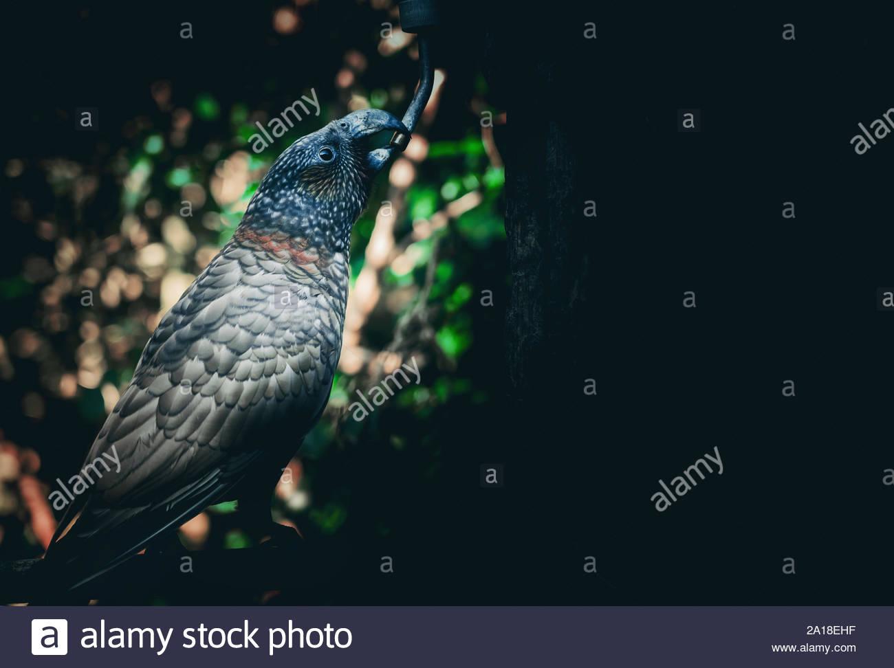 Background Kaka Stock Photos Background Kaka Stock Images   Alamy 1300x972