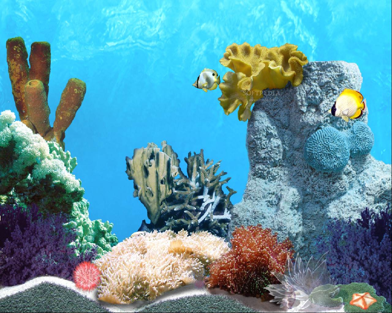 wallpaper fish wallpaper coral wallpaper wallpaper underwater fish 1280x1024