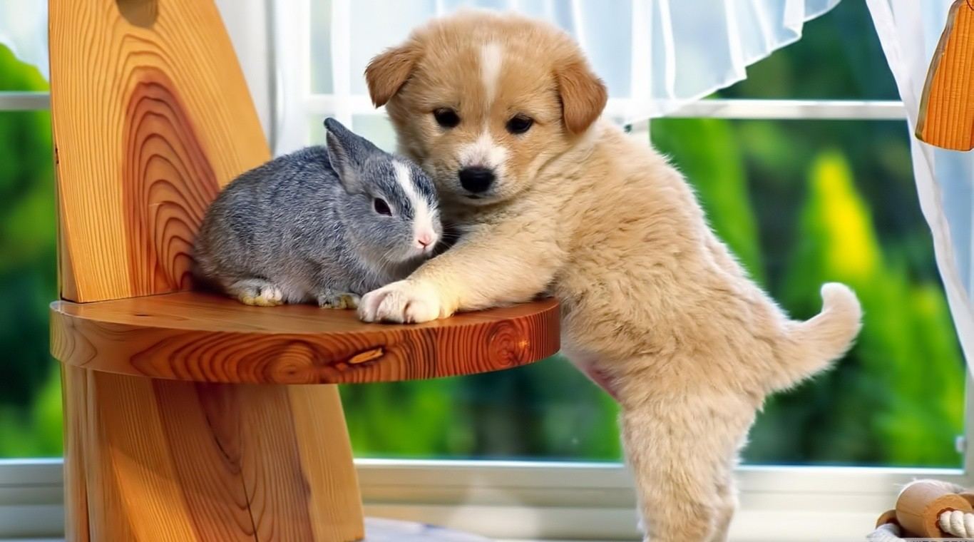Best Friends Puppy And Rabbit HD Wallpaper Animals HD Wallpaper 1366x760