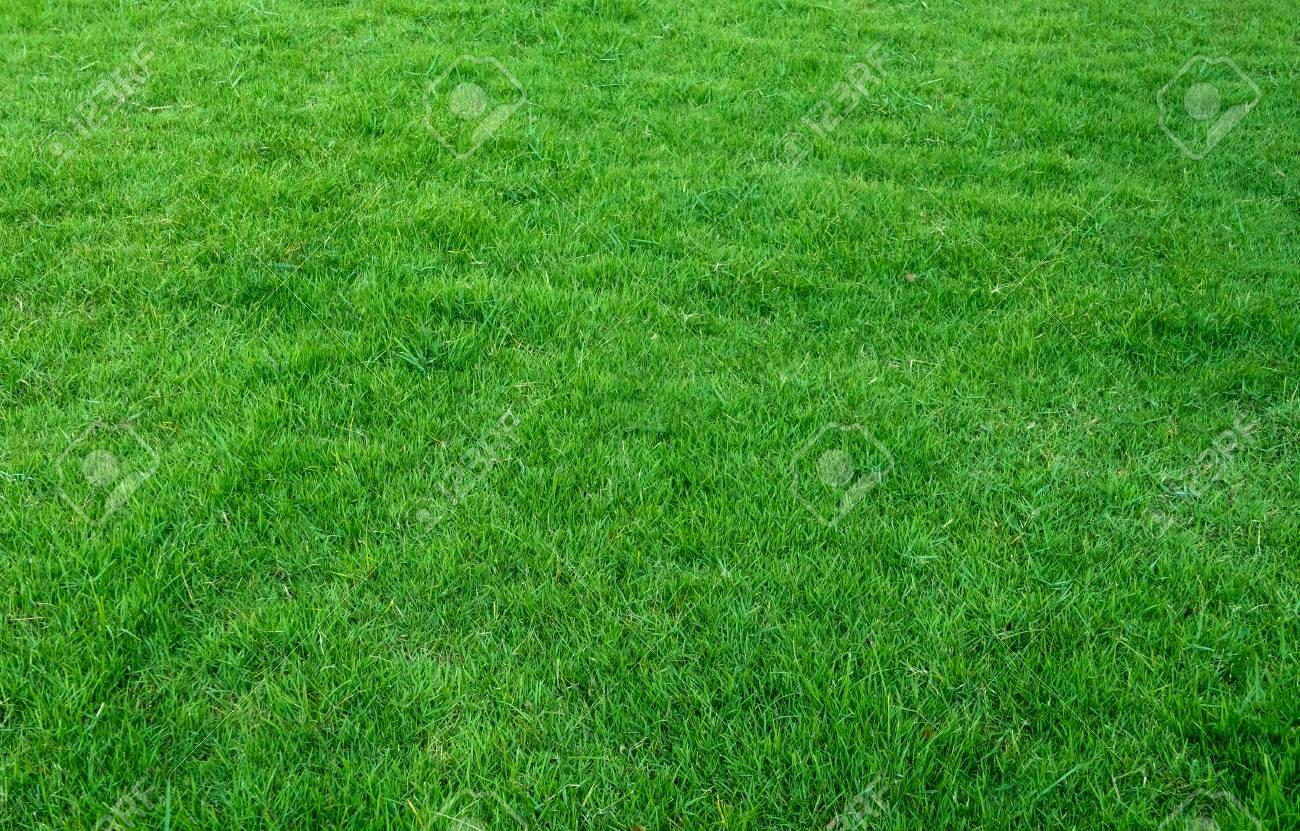 Background Of Green Grass Field Green Grass Pattern And Texture 1300x831