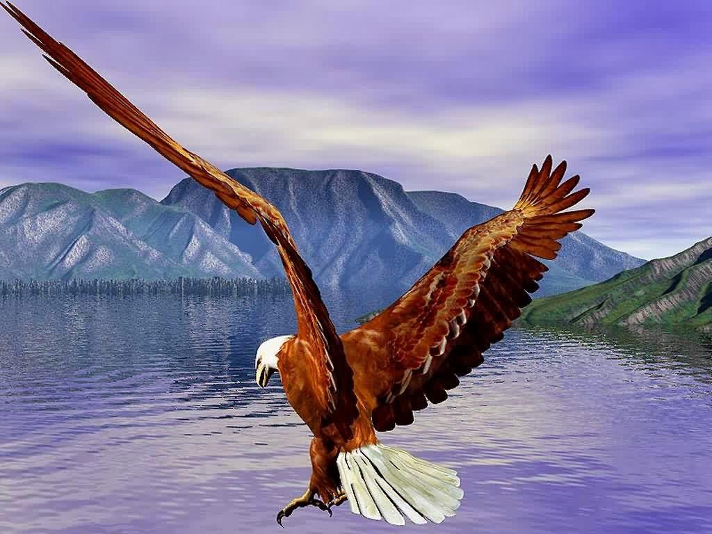 47+ Eagles Wallpapers Free Download on WallpaperSafari