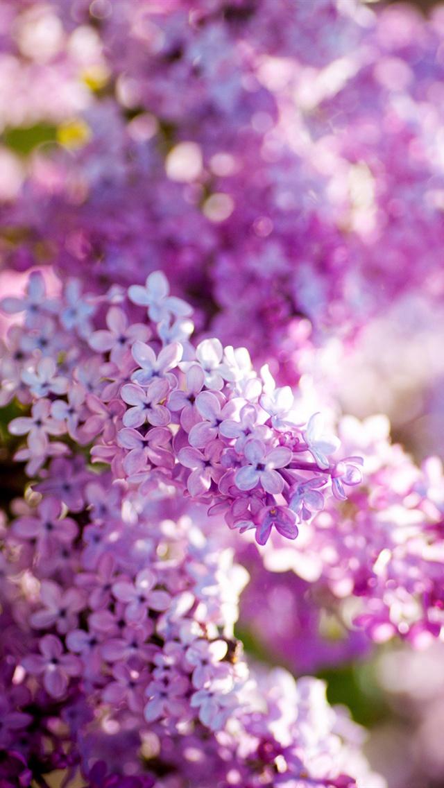 29 Spring Lilacs Desktop Wallpaper On Wallpapersafari