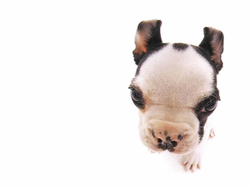 Pics Photos   Close Puppy Funny Pets Wallpapers 1024x768