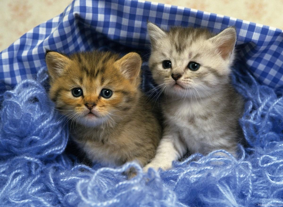 Cute Kittens Desktop Hd Walpapers Gallery Cute Kittens Desktop Hd 1200x881