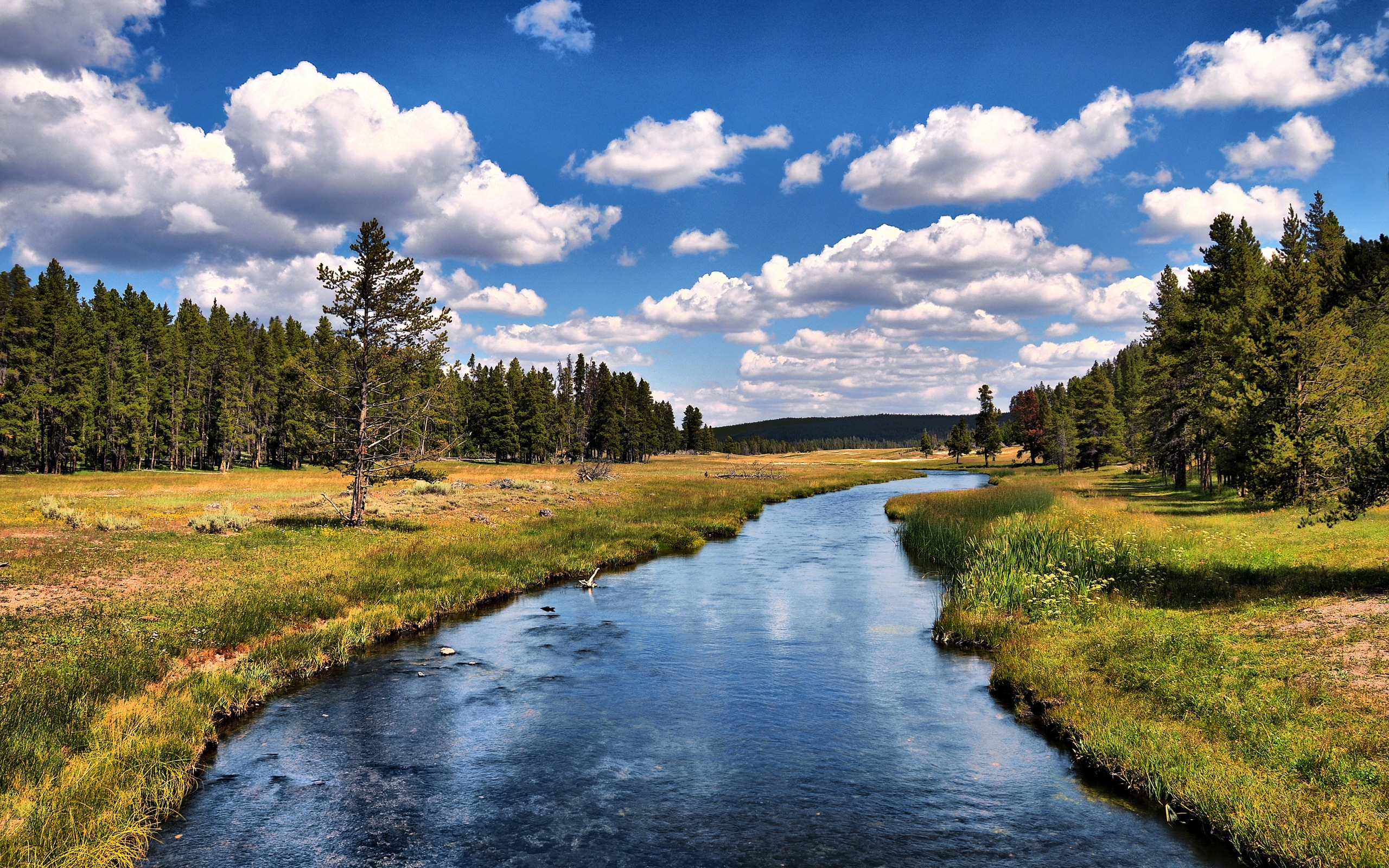 desktop wallpapers Yellowstone National Park 2560x1600
