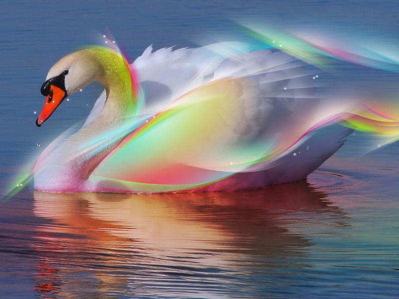 Incredible Cool Colorful Digital Art Wallpapers 800x600
