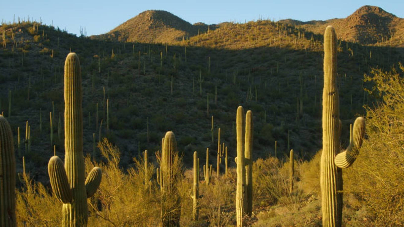 Trading Desk Time for Desert Time at Saguaro National Park 1600x900