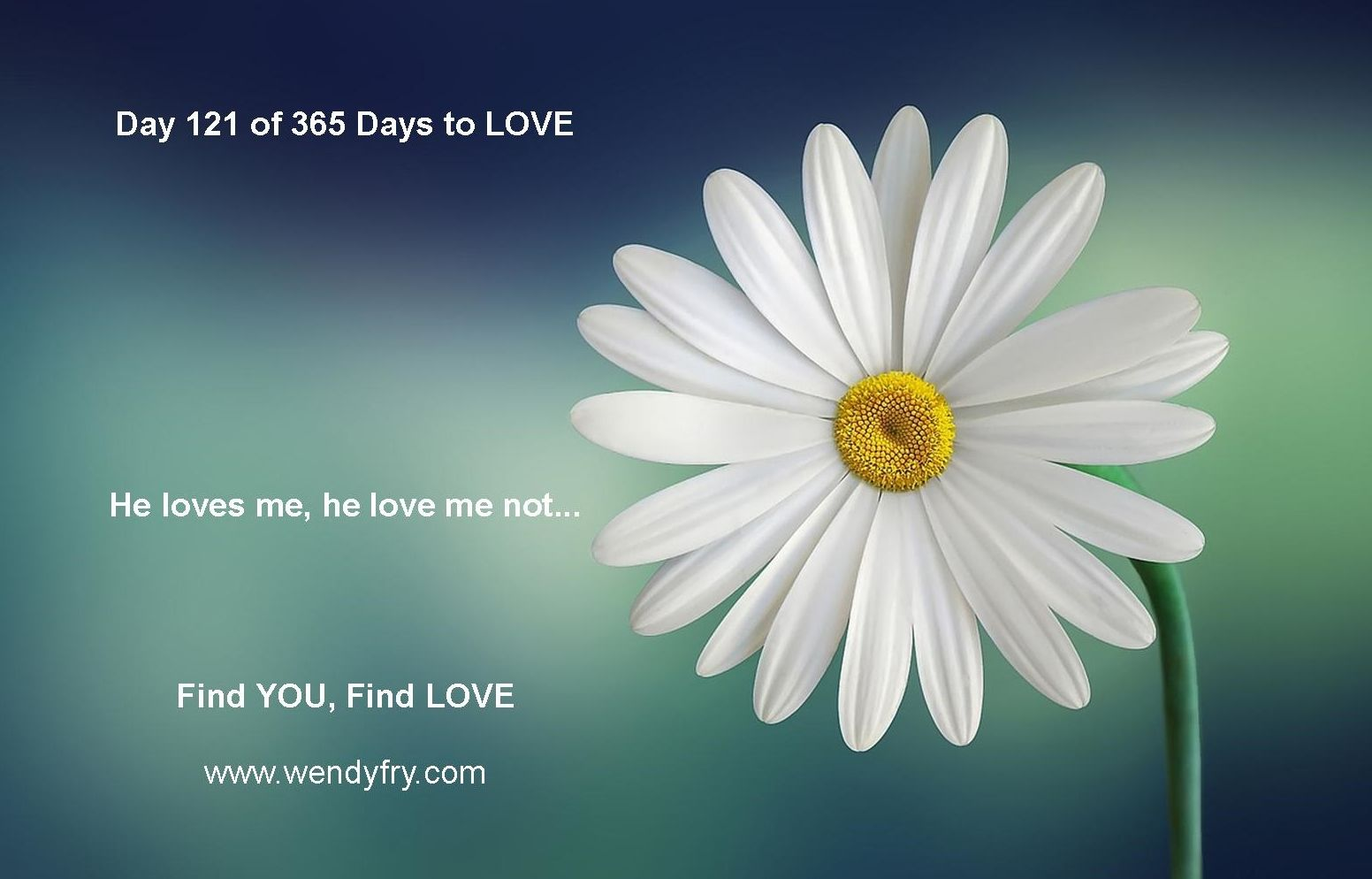 Day 121 of 365 Days to LOVE He loves me he loves me not All 1552x994