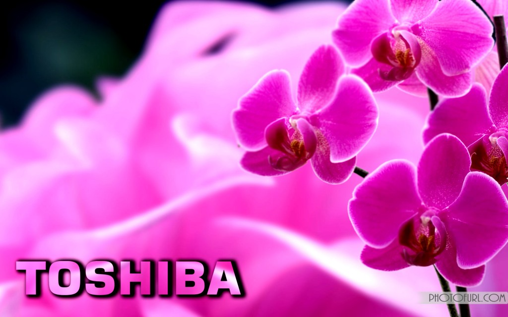 Toshiba Laptop Desktop Wallpapers Nature Animated Mix Photos 1024x640