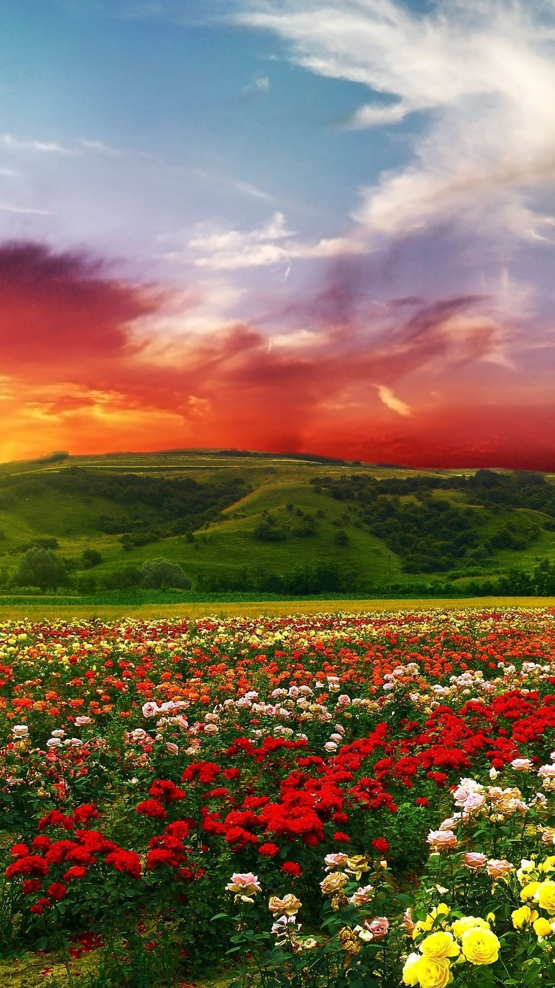 Free Download Flowers With Colorful Clouds 4k Ultra Hd Wallpaper 4k