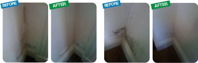 How to remove mould and mildew from walls 650x209