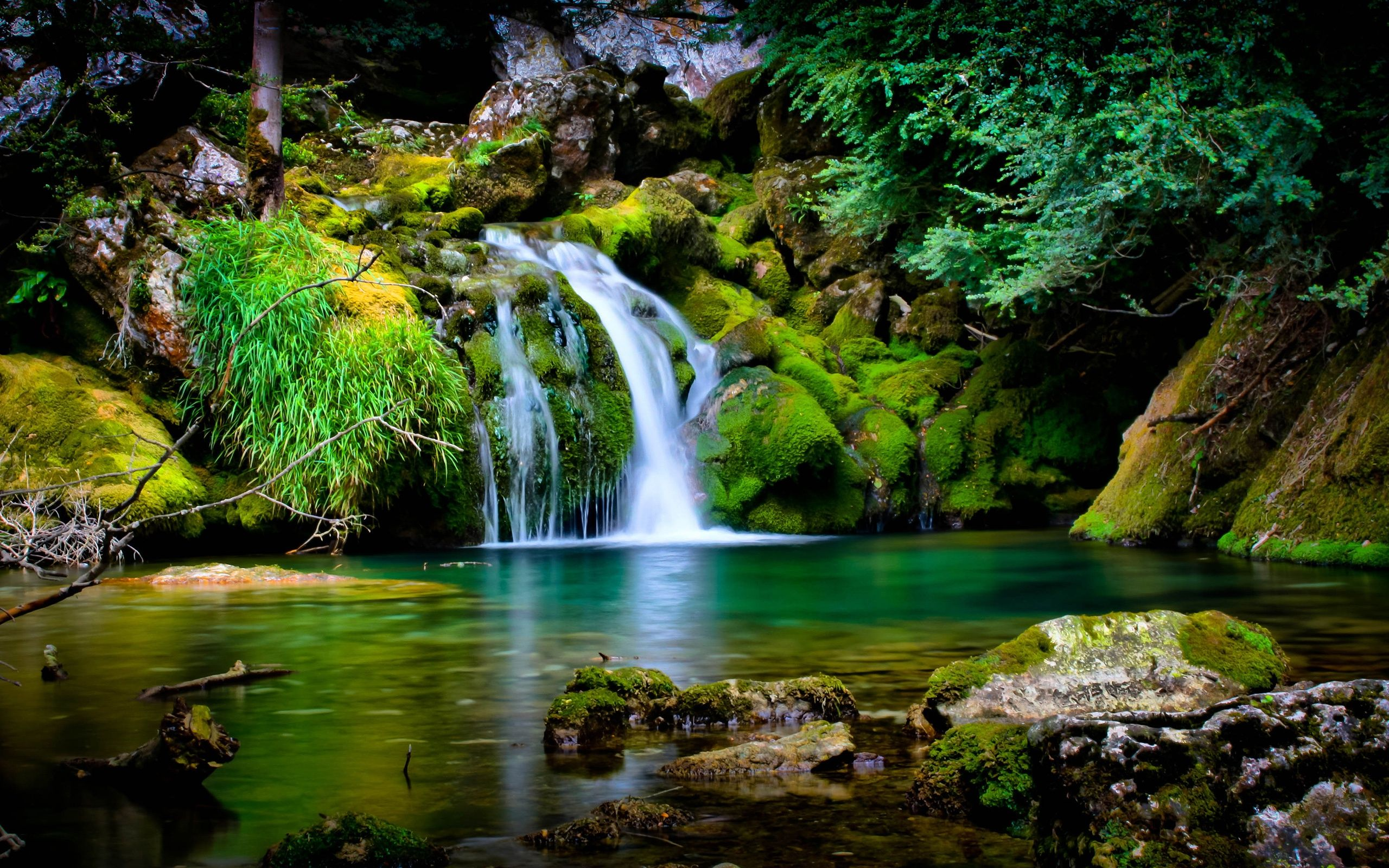 Beautiful Jungle Scene   Best Nature Wallpapers 2560x1600