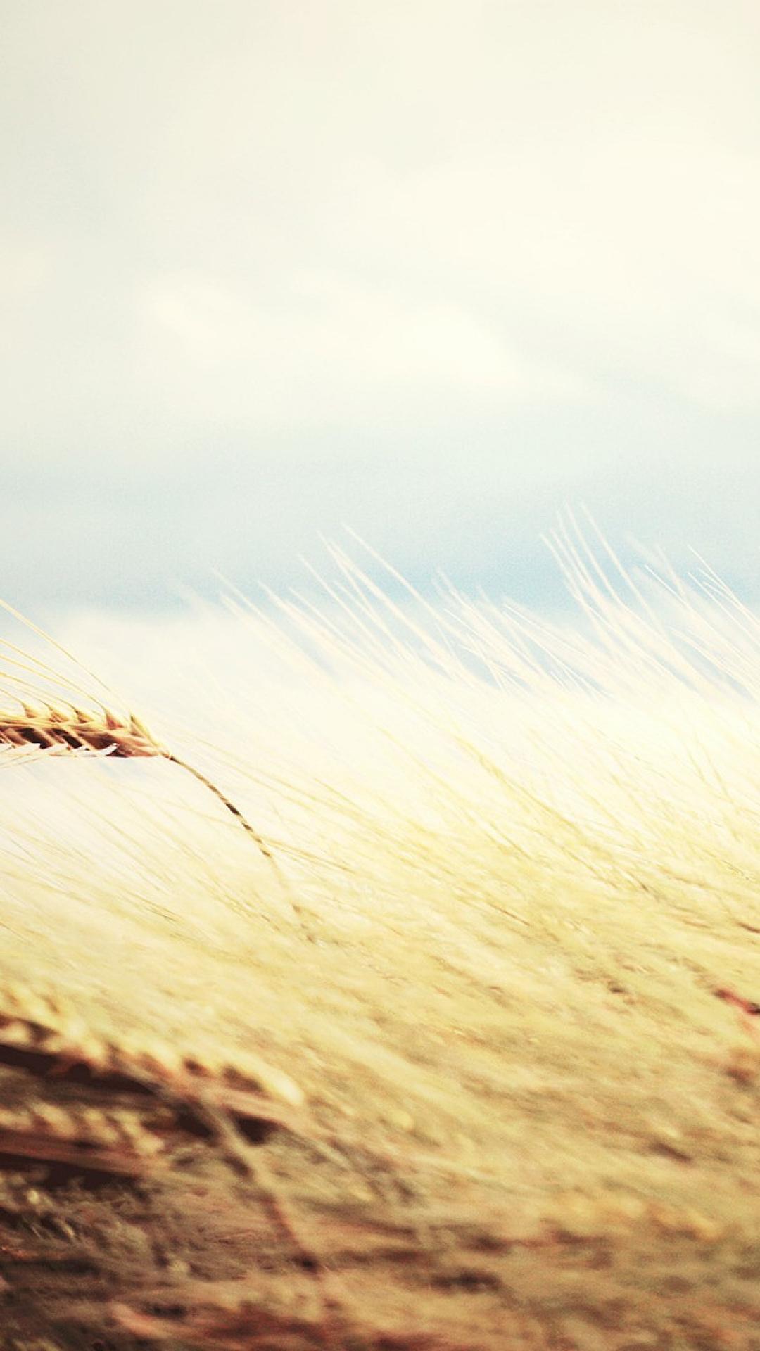 yellow fields wheat 982331 1080x1920