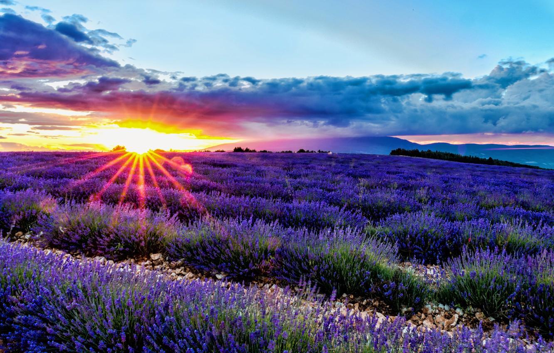Wallpaper field sunrise dawn France France lavender Provence 1332x850