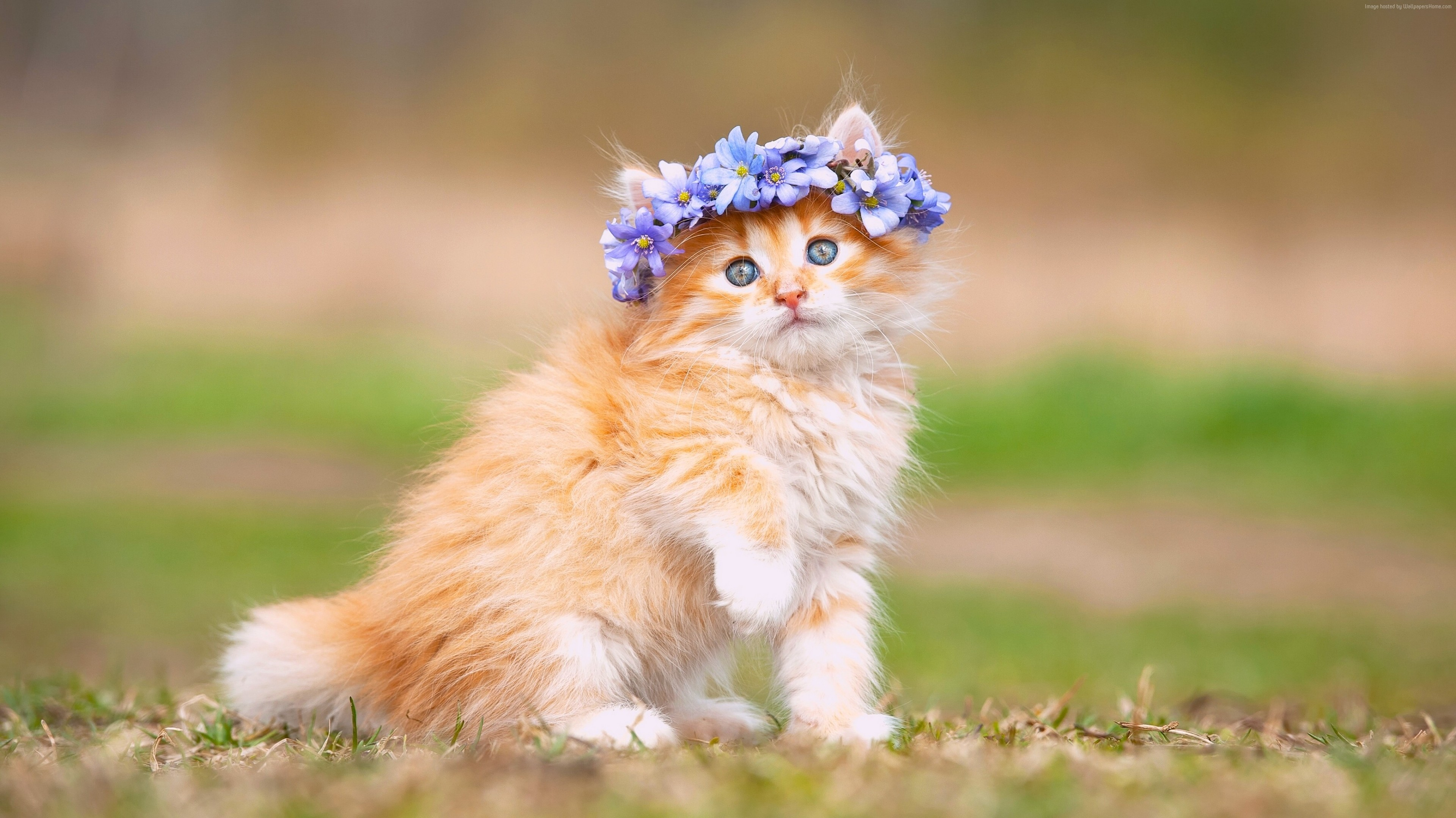 Wallpaper kitten cute animals 4k Animals Wallpaper Download 3840x2160