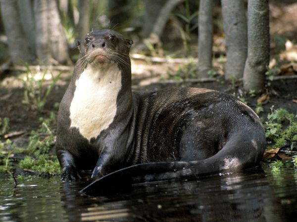 Otter Pictures   Animal Wallpapers   National Geographic 600x450
