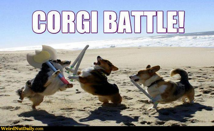 Funny Corgi Wallpaper - WallpaperSafari | 700 x 428 jpeg 57kB