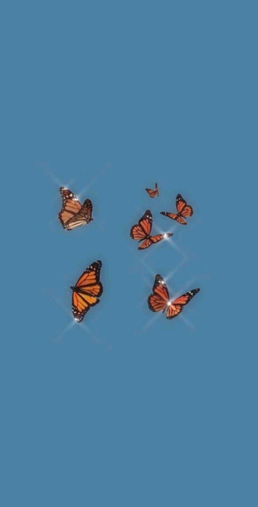 blue aesthetic blueaesthetic in 2020 Butterfly wallpaper iphone 1080x2121