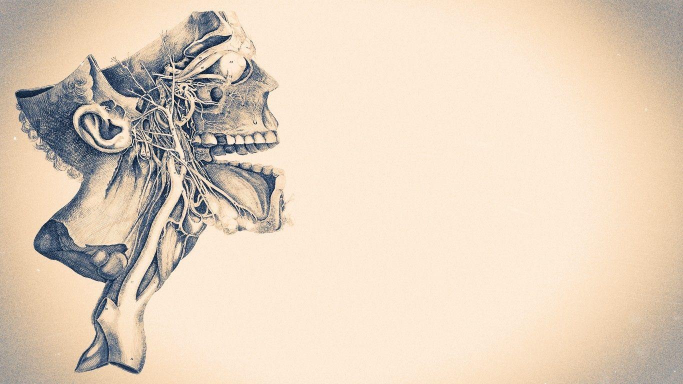 medicine skull artwork minimalism wallpaper Hd wallpaper 1366x768