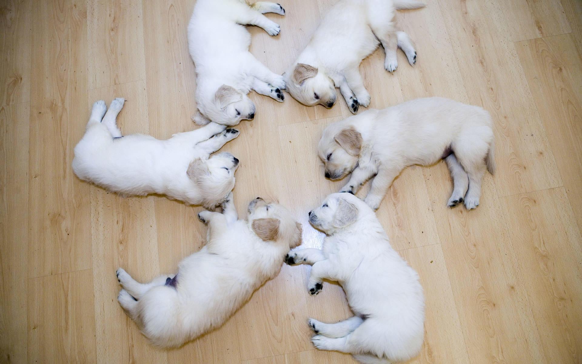 comwallpapersanimal wallpapersdoerscute puppies wallpaper 1920x1200