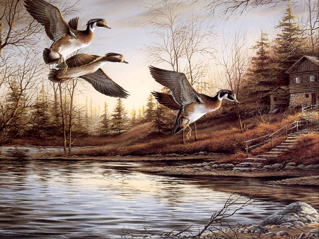 Duck screensavers and wallpaper wallpapersafari for Animal oil paintings