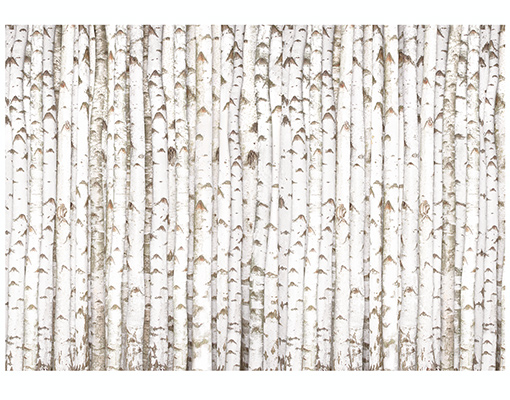 Photo Wall Mural BIRCH WALL 400x280 Wallpaper Tree Forest Wood Trunk 510x400