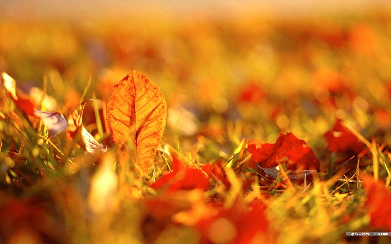 HD Fall Desktop Wallpaper Widescreen 1440x900