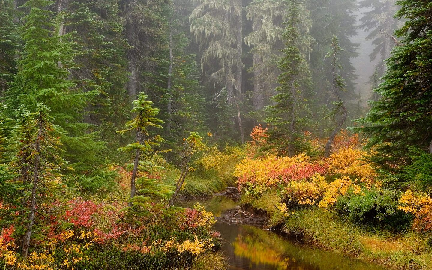HQ Brook Mount Rainier National Park Wallpaper   HQ 1440x900