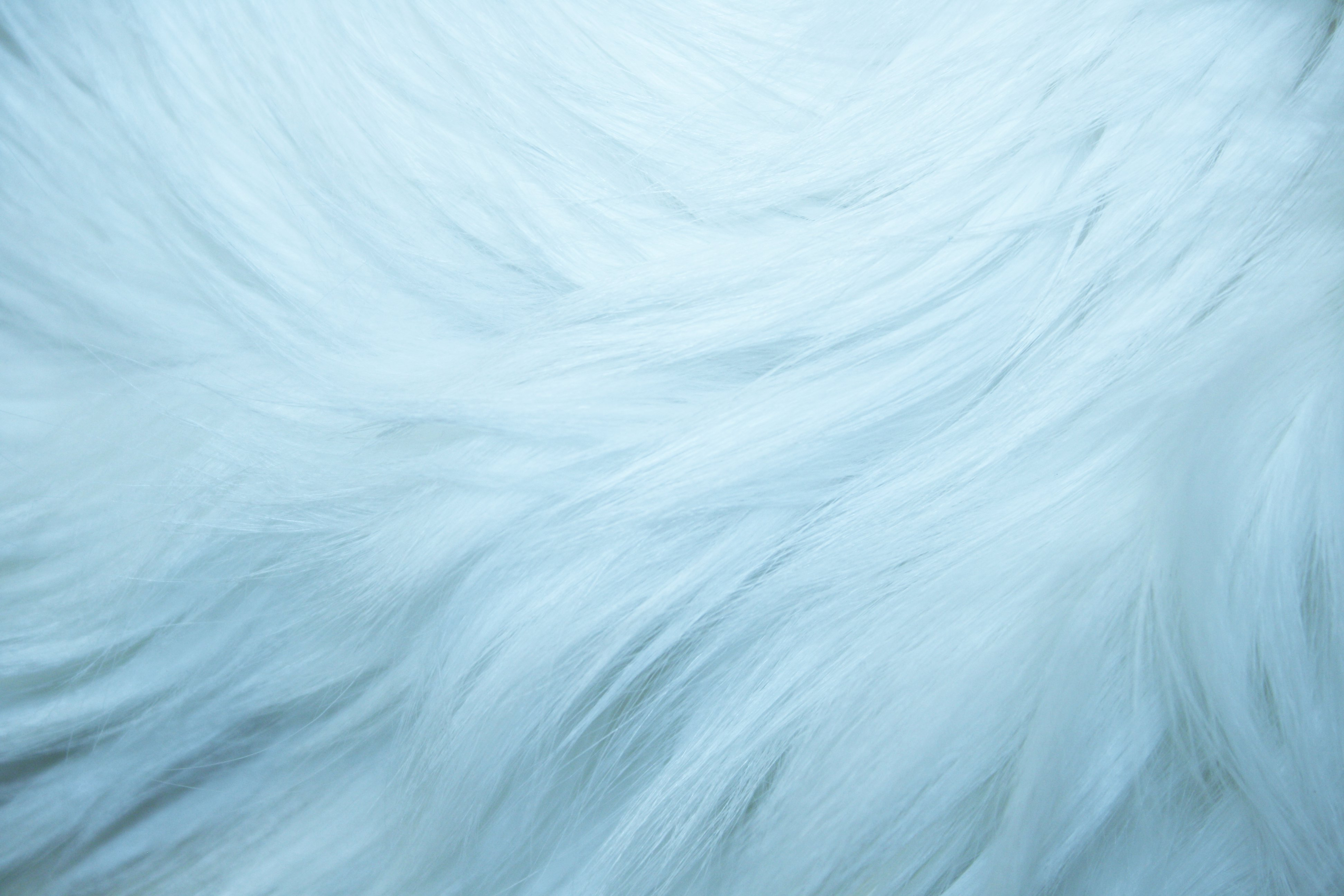 Baby Blue Fur Texture   High Resolution Photo   Dimensions 3888 3888x2592