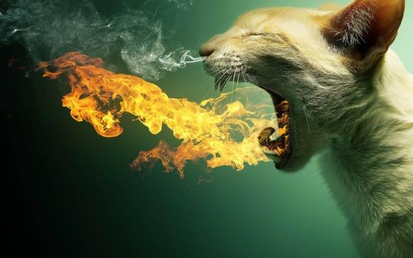 catsfire cats fire smoke flame breath 1680x1050 wallpaper Cats 600x375