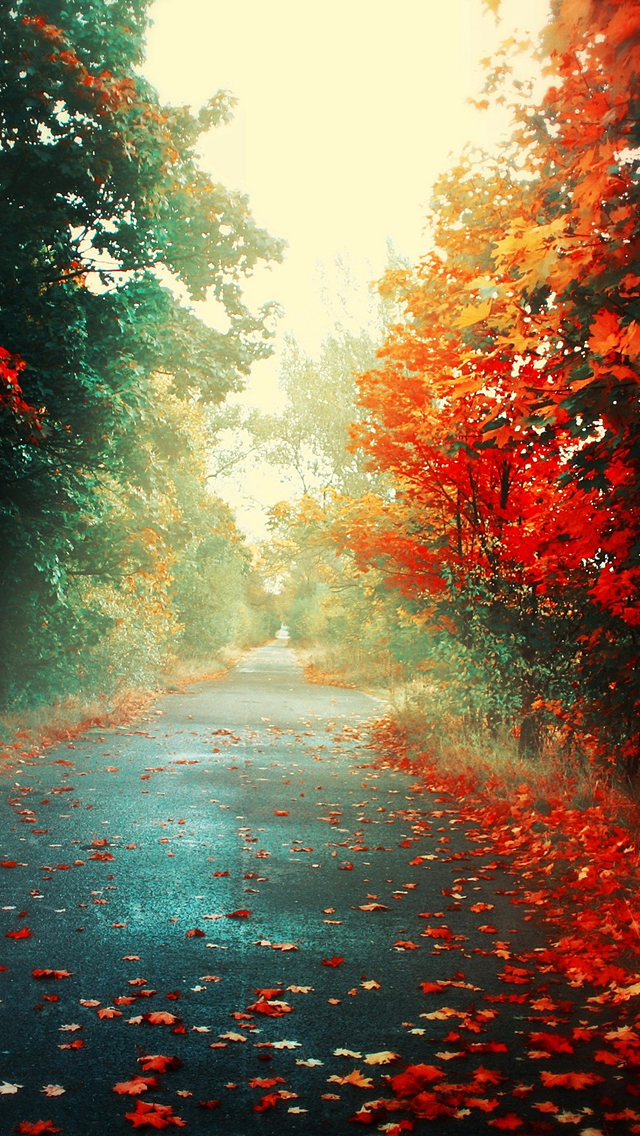 Trees Autumn iPhone 5s Wallpaper Download iPhone Wallpapers iPad 640x1136
