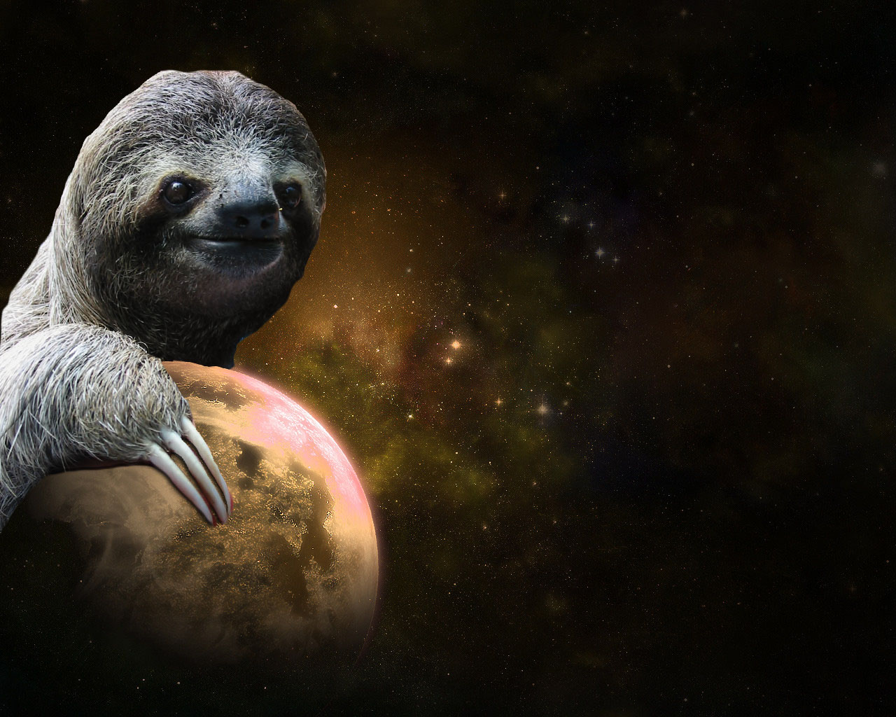 sloth wallpapers wallpapersafari
